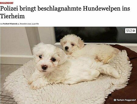 15. Dezember 2020 | Gadebusch Rehnaer Zeitung | Polizei bringt beschlagnahmte Hundewelpen ins Tierheim