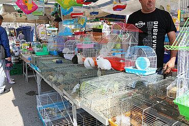 Ausländischer Tiermarkt